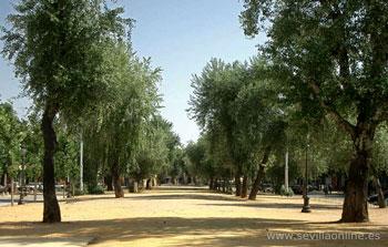 Alameda de h rcules sevilla sevilla online es - Jardines de hercules sevilla ...